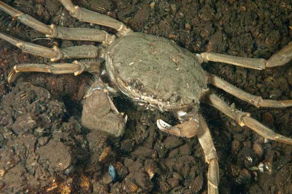 verleden tijd krabben